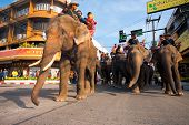 Surin Elephants Marching Low Angle