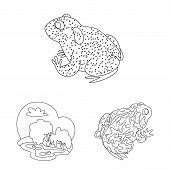 Isolated Object Of Amphibian And Animal Icon. Set Of Amphibian And Nature Stock Vector Illustration. poster