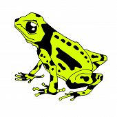 Frog Cartoon Tropical Yellow Animal Cartoon Nature Icon Funny And Isolated Mascot Character Wild Fun poster