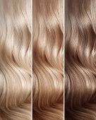 Natural Dyed Hair Colors Set. Tints. Hair Coloring Steps From Blonde To Brown. Strand Of Beautiful W poster