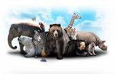 picture of zoo animals  - A group of animals are grouped together on a white background - JPG