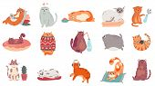 Cute Cats. Funny Cat In Box, Adorable Sleeping Kitty And Fat Cat In Sweater Vector Illustration Set. poster