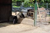 horse and mule in a cowshed concept of captivity