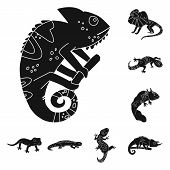 Vector Design Of Zoo And Environment Icon. Set Of Zoo And Reptile Vector Icon For Stock. poster