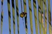 Palm Frond Bird