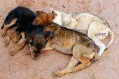 Young Street Dogs Huddling Together And Sleeping