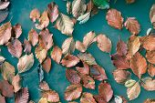 Orange Autumn Leaves Floating In Turquoise, Abstract Surreal Natural Autumn Background poster