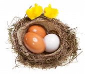 birds nest with eggs and toy chickens inside on white