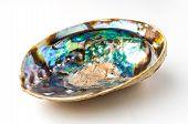 Aqua Color Of Abalone (pao Hua Sea Shell)