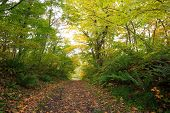 image of fukushima  - A colorful autumn path in the forest Fukushima Japan - JPG