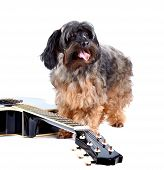 Decorative Shaggy Doggie And Guitar.