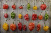 Different Habanero Chilis