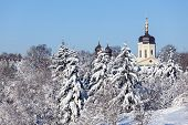 Beautiful winter landscape with snow covered firs and old church