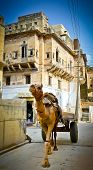 picture of camel-cart  - Camel dragging a cart in the streets of Mandawa Rajasthan India - JPG