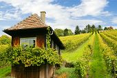 Vineyard Hut