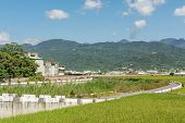Rural scenery of Hualien with paddy farm and mountain faraway in Hualien, Taiwan, Asia.