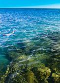 Maldivian Snorkeling