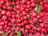 image of radish  - Pile of shapely pink and red radishes - JPG