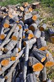 pic of alder-tree  - fresh alder tree cuts firewood in farm yard - JPG