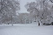 Winter At The Cambridge Common