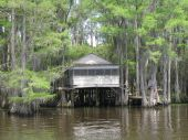 Caddo Lake 9