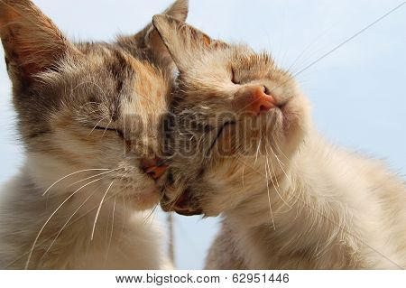 Love And Tenderness Of Cats poster