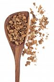 Gentian root herb used in herbal medicine in a wooden spoon over white background. Gentiana lutea.