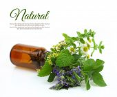 Fresh herbs in a medical bottle