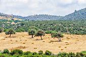 Typical Cyprus Rural Landscape
