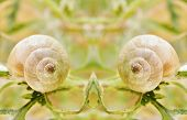 stock photo of garden snail  - Close up of garden snail on green plant - JPG