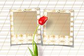 Bouquet Of Beautiful Red Tulips With Slides On Paper White Background
