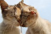 stock photo of kitty  - love and tenderness of cats against the sky - JPG