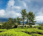 Kerala India travel background - green tea plantations in Munnar, Kerala, India