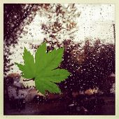 Instagram style image of a leaf against a window during a rain storm