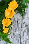 stock photo of chanterelle mushroom  - Chanterelle mushrooms and fern on the old wood - JPG