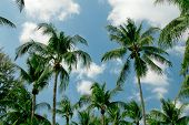 image of tropical island  - Palm trees on the blue sky background - JPG