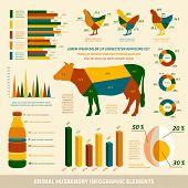 Animal husbandry infographics flat design elements