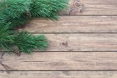 Christmas-tree Branch
