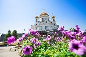 Cathedral of Christ the Savior with purple flowers