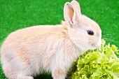 Domestic Rabbit And Salad poster