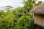 Yasuni jungle lodge amazonian rain forest