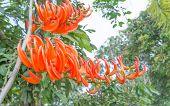 Dhak Flower