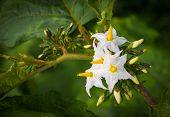 Close Up Shot Of Egg Plant Flower