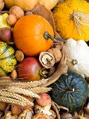 picture of yellow milk cap  - Autumn background with pumpkins mushrooms pomeranat wheat and nuts - JPG