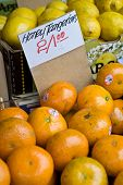 picture of tangelo  - A close up of honey tangerines at a market with a hand written sign - JPG