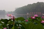 Lotus With Boats In The Background, Beihai Park, Beijing