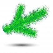 Christmas Green Conifer Twig