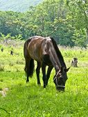 Horse Is Grazed On An Edge Of Summer Wood.