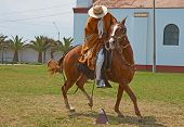 Paso Horse and Rider