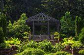 foto of pergola  - A pergola in an outdoor garden makes the perfect backdrop for a summer wedding  - JPG